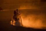 training trotters race in arena in dusk, Belgrade hippodrome poster