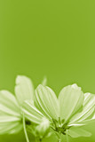 green flower - environmental conservation - vertical picture poster