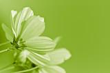 green flower - environmental conservation poster