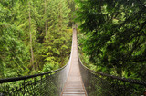 lynn valley suspension bridge - 9169876