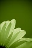 green daisy flower - environmental conservation concept poster