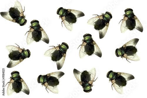 group of Dead house flies isolated on white