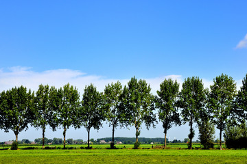 Landscape with a row of trees