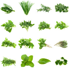 Collection of fresh herbs, isolated on white