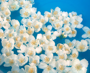 White jasmin flowers in blue water. Used optical fog filter.