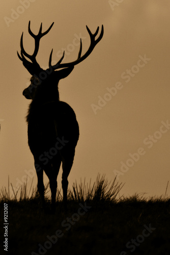 Foto op Plexiglas Hert Red Deer (Cervus Elaphus) On Guard