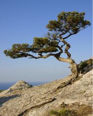 Crimea. Coast of Black sea. Reserve