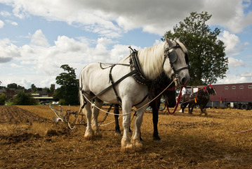 Two teams of horses demonstrate retro working practices