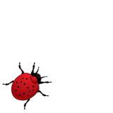 Ladybird illustration or better known in the US as a ladybug poster