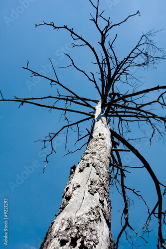 Old tree in blue sky