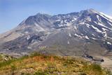 Wildflowers Caldera Mount Saint Helens National Park Washington poster