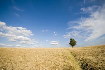 arbre et champ