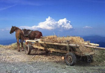 Horses and waggon