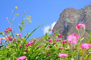 Wildblüten auf Berwiese in den Alpen, Piemont