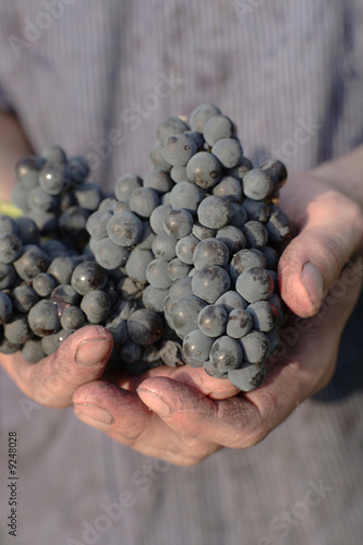 Man holding red grapes