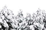 Winter tree branches covered with fluffy snow poster