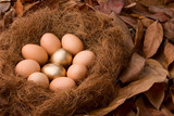 Two golden eggs and eight regular ones on nest poster