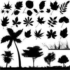 flower, leaf and tree vector