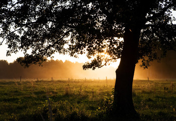 View of backlight tree and sunset through fog..