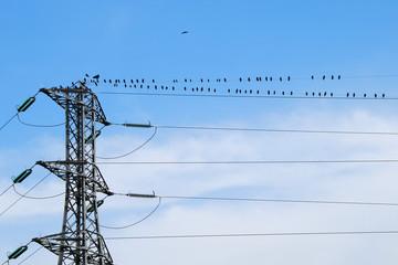 oiseaux sur ligne à haute tension