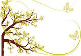 Fototapety arbre aux papillons janonais
