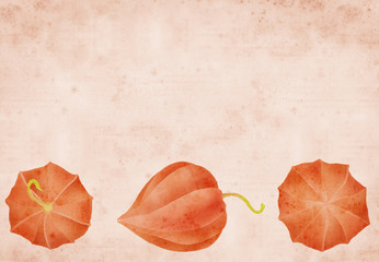 physalis border on old paper background