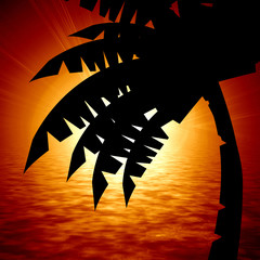 palm tree on a red sunlight background