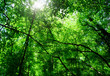 morning sun in deep forest