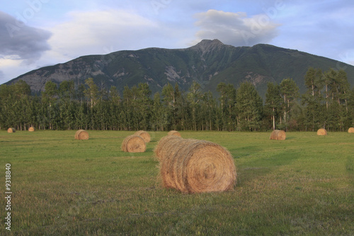 Evening light cast on hay bails
