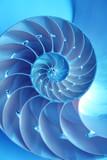 Split nautilus seashell showing inner float chambers