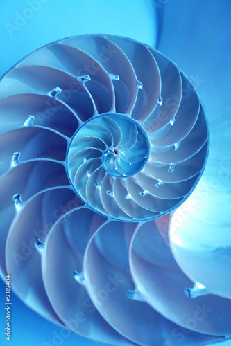 Split nautilus seashell showing inner float chambers - 9319404