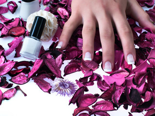Fingers, beautiful nails on violet rosen