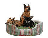 three dogs sharing a small pet bed poster