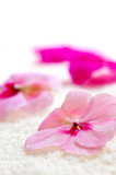 Gentle fresh flower on luxury towel close up poster