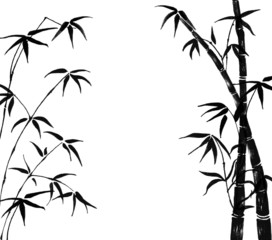 Silhouette of branches of a bamboo on a white background