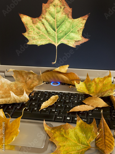 Autumn on internet