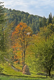 Autumn landscape in Apuseni Mountains,Romania. poster