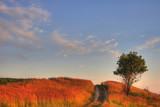 The Sundown. Road and tree on horizon poster