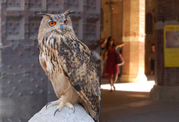 Eagle owl on a background Siena fortresses