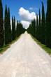 Wolkenhimmel,Zypressen, der Weg ist das Ziel,Toskana,
