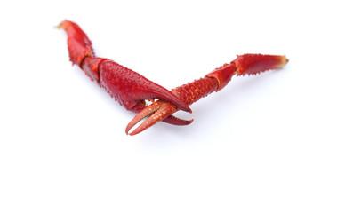 crayfish claws