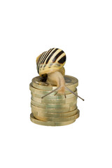 Snail on coin pile looking down