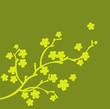 branche en fleur olive et vert pomme