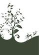 svg vector serie - floral design border