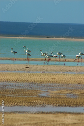 Flamingoes on lagoon