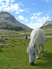 white horse in mountain