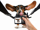 a baby basset hound getting his photo taken poster