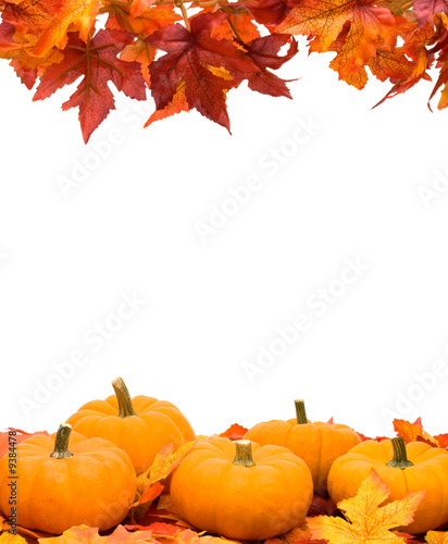 Fall leaves with pumpkin on white background - 9384478