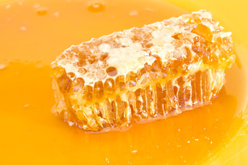 Brick of Solid Waxy Honeycomb in Natural Golden Honey