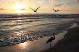 Fototapety Florida sunset